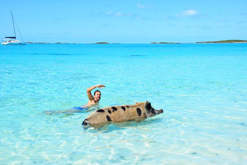 Pig Beach, em Exuma - Bahamas