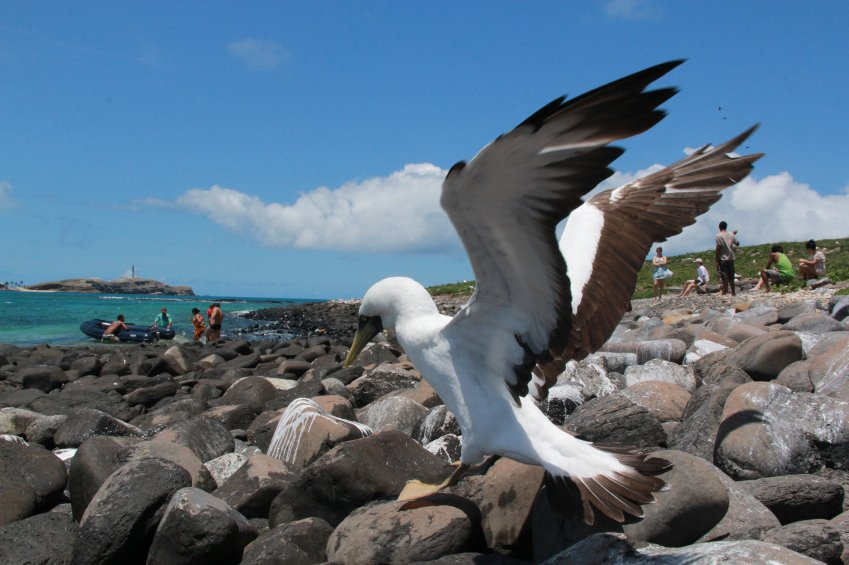 Caravelas, Brazil - Octuber 22, 2012: Bird is seen in the Abrolhos National Marine Park in southern Bahia. ISTOCK / Jo Souza.     *** Local Caption ***