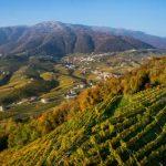 Abruzzo: intesa fra Citta del Vino e Regione per cabina di regia