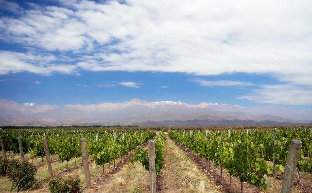 vinicolas-mendoza