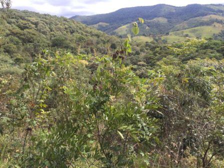 Vegetação que foi replantada na região (Foto: Gabriela Mendes)