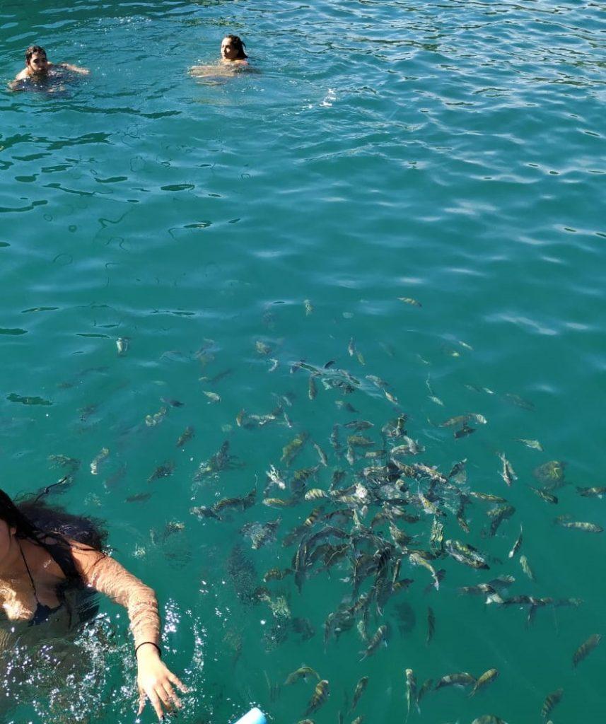 peixes podem ser avistados ao lado dos banhistas em paraty