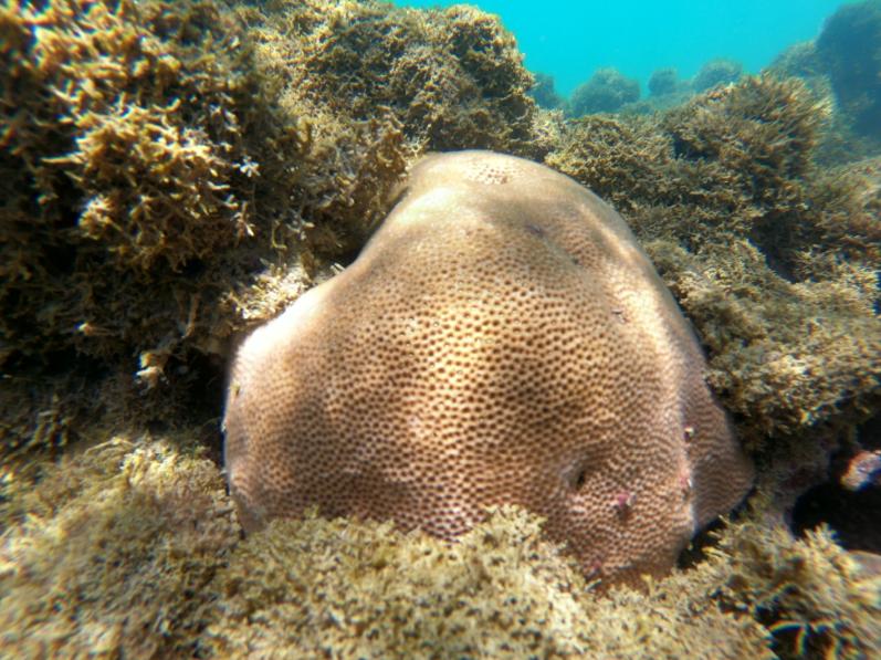 Após anomalia térmica no litoral da Paraíba, pesquisadores identificam recuperação de 42% dos corais da região