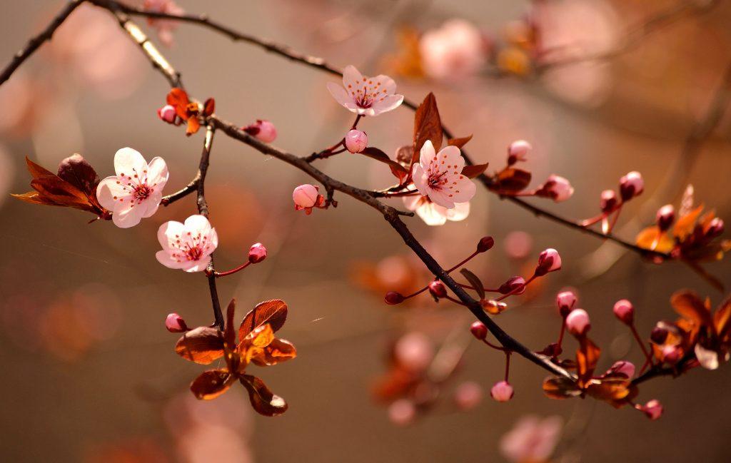 Japão: além das cerejeiras, a primavera no país encanta com flores e cores variadas